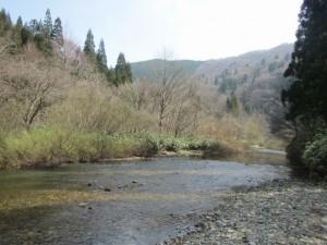 植生豊かな細見谷渓畔林