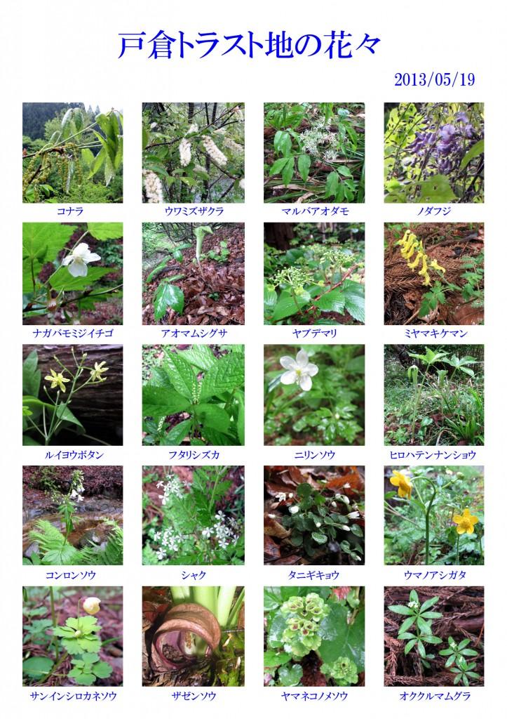 130519-戸倉の花々(白)