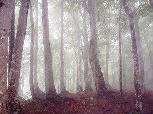幻想的なブナ林の内部