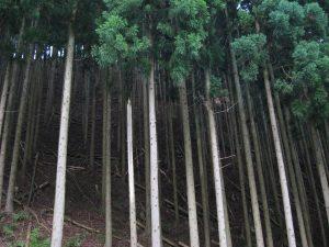 2008.7.4伊由峠 (3)